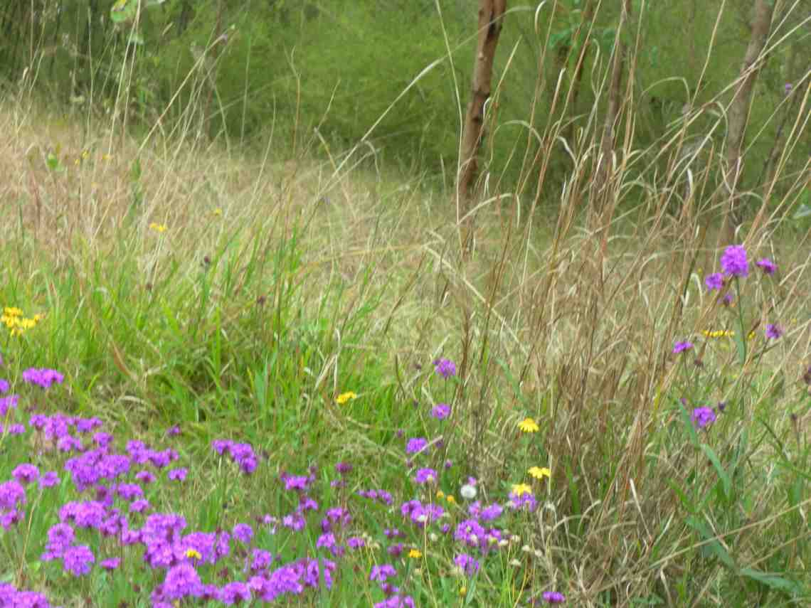 Mulgoa Nature Reserve in Spring--Alive with reverberant sounds
